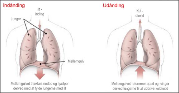 Lungernes funktion ved ind- og udånding