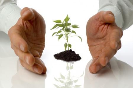 Bæredygtig vækst