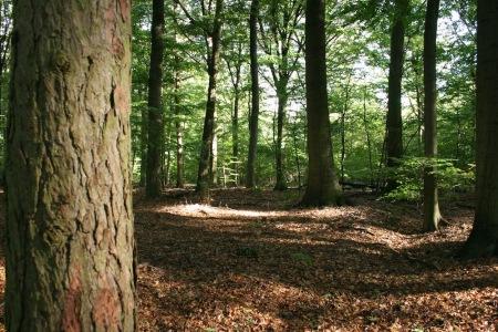 I skovens dybe stille ro. Blog af Flora Eriksen