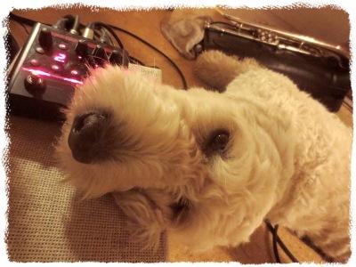 Min hund Tao